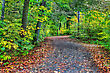 HDR Of A Forest Path During Fall Colors In Soft Focus stock image