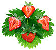 Heap Of Fresh Strawberries On Green Foliage . Isolated stock image