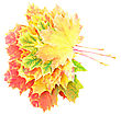 Heap Of Perfect Autumn Leaf Over White. Isolated Over White stock photo