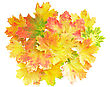 Heap Of Perfect Autumn Leaf Over White. Isolated Over White stock image
