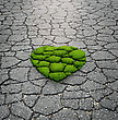 Heart Shape Grass Growing From The Asphalt stock image