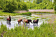Herd Of Wild Steppe Horses On River Background stock photo