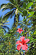 Hawaii Hibiscus Flower In The Jungle stock photo