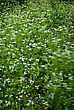 High Grass With White Flowers Moving In Strong Wind At Sunny Summer Day stock photo