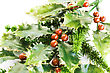 Holly Berry Plant With Red Berries On White Background, Christmas Decoration stock photo