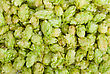 Hop Texture stock photography