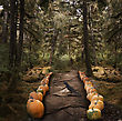 Horror Background With Spooky Trees And Pumpkins stock image