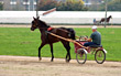 Horse and Buggy Racing stock photo