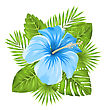Illustration Beautiful Blue Hibiscus Flowers Blossom And Tropical Leaves, Isolated On White Background - Vector