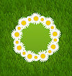 Illustration Spring Freshness Card With Grass And Camomiles Flowers - Vector