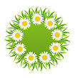 Illustration Spring Freshness Round Card With Grass And Camomiles Flowers - Vector