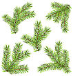 Illustration Spruces Branches Isolated On White Background. Traditional Elements For New Year Design - Vector stock illustration