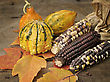 Indian Corn And Colorful stock photography