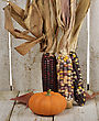 Indian Corn And Pumpkin On Wooden Background