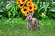 Jack Rabbit Poses Next To A Bunch Of Flowers In Hdr stock photo