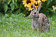 Jack Rabbit Poses Next To A Bunch Of Flowers stock photography