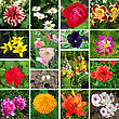 Kaleidoscope Of Sixteen Different And Colorful Flowers stock image