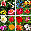 Kaleidoscope Of Sixteen Different And Colorful Flowers stock photo