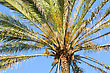Krone Palm Tree Against A Background Of Sky stock photo