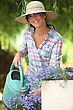 Lady Watering Flowers stock photo