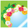 Ladybirds And Daisies - Summer Card With Empty Space For Your Text