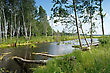 Pastoral Lake In The Forest And The Trees Felled By Beavers stock image