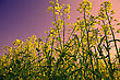 Landmark With Flower Field Before Sunset stock photo