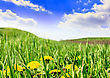 Landscape- Green Grass, The Blue Sky And White Clouds stock photography