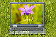 Laptop Computer With Beautiful Flower On Screen stock photography