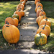 Large Pumpkins Along A Sidewalk For Decoration stock photo