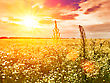 Late Sunset On The Summer Meadow, Natural Landscape stock photo
