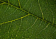 Leaf Veins. Abstract Natural Backgrounds For Your Design stock photography