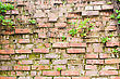 Lichen On Wall. Background Of Brick Wall Texture stock photo