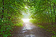 light in the forest after rain stock image