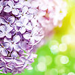 Glitter Lilac Flowers With Beauty Bokeh, Abstract Floral Backgrounds stock photo