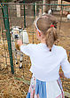 Little Girl Feeding Goat On The Farm stock photo