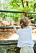 Little Girl Looking At Animals In The Zoo stock photo