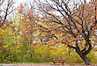 lonely bench in the autumn park stock photography