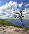 Lonely Dry Tree Against The Blue Sky And Lake stock photo