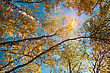 Looking To The Sun, Abstract Autumnal Backgrounds For Your Design stock image
