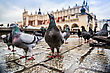 Lot Of Doves In Krakow Old City. Market Square. Poland stock photography