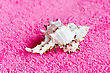 Lot Seashell On Pink Towel stock photo