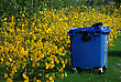 Lot Of Yellow Flowers, Green Leaves And Big Blue Plastic Garbage Container At Summer Sunny Day