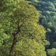 Lush Green TreeTops stock photography