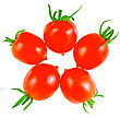 Lush Tomatoes . Isolated Over White stock photography