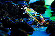 Macro Of Colorful Abstract Water Drop & Rocks stock photo