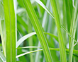 Macro of Grass stock photography