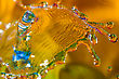 Water Drops Backgrounds Macro Photography Of Colorful Abstract Water Drop Creations stock photo