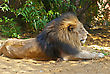 Male Lion Lying On The Ground stock image