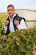 Man Picking Grapes stock photo